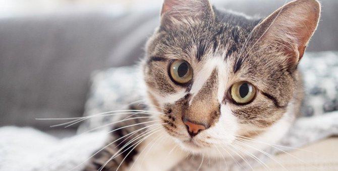 猫との『スキンシップ』でできる健康チェック3つ