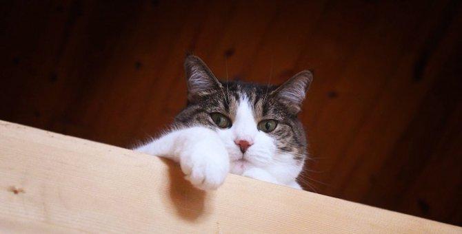 猫が飼い主を見下してる時にする5つの行動