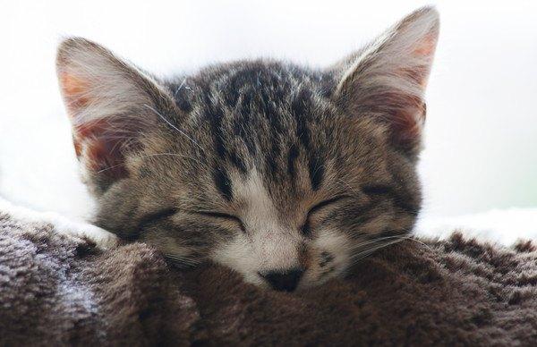 猫を幸せにする8つの飼い方