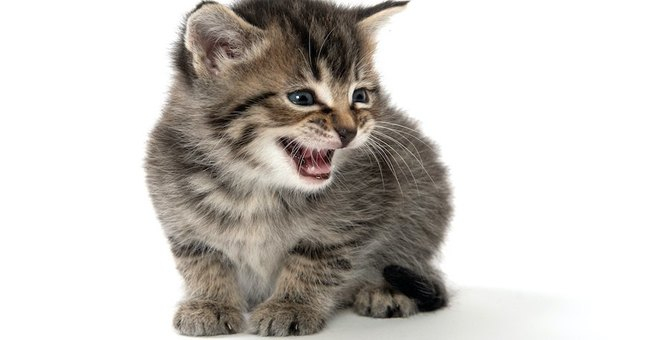 猫には声帯がない!?知られざる猫の真実をご紹介