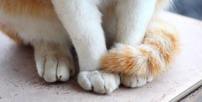猫がしっぽマフラーするのはどんな時?2つの心理