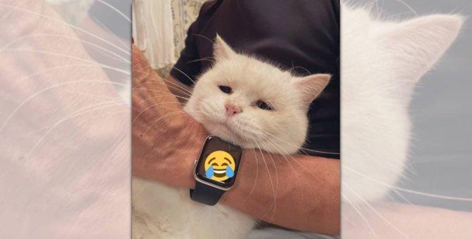 ショボショボ顔で爪切り「シニア猫さん」を15万人が応援!