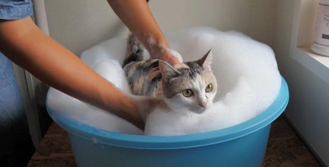 あわあわもこもこ♪猫ちゃんの優雅な入浴タイム♡