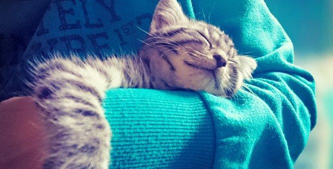 猫が抱きつく時の3つの気持ち