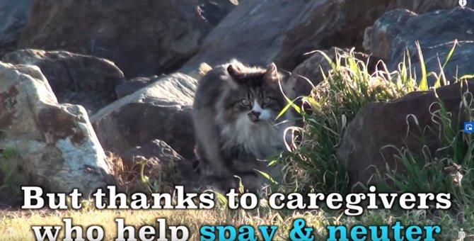 『キャットパラダイス』に住む地域猫の暮らしを覗いてみよう!