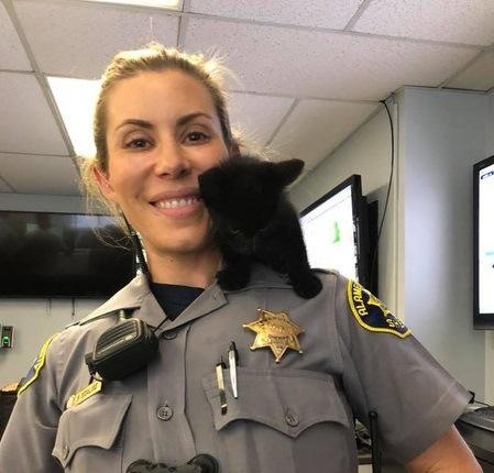 警察署に救いを求めて迷い込んだ子猫
