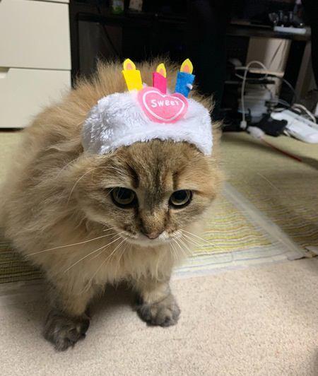 たとえ猫バカと言われても…してあげたいと思うこと3選