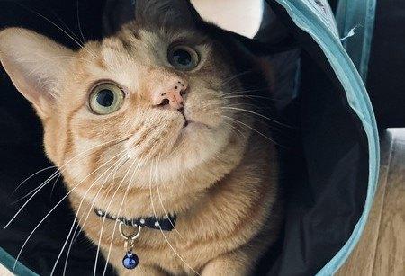 猫の飼い主になったら絶対心がけるべき4つのこと