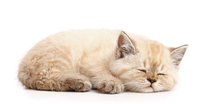 猫の注意すべき『眠り方』5選