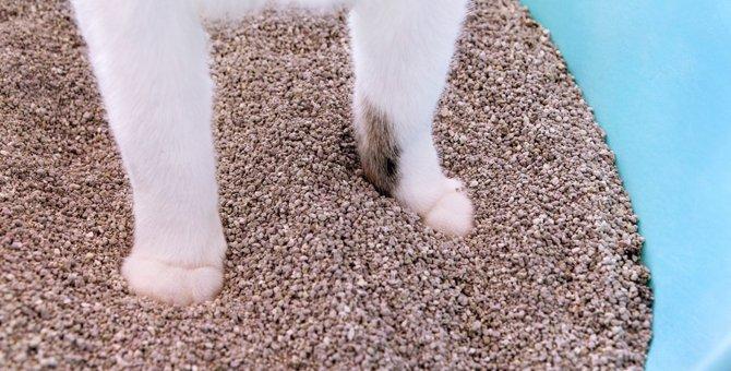 猫が「トイレの砂を撒き散らす」のはどうして?解消できた3つの事