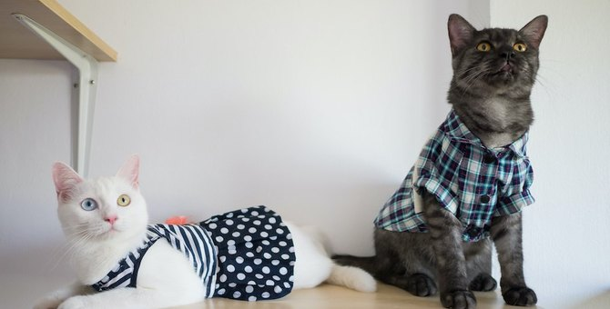 【かわいい】猫にOKな服とNGな服【ストレス?】