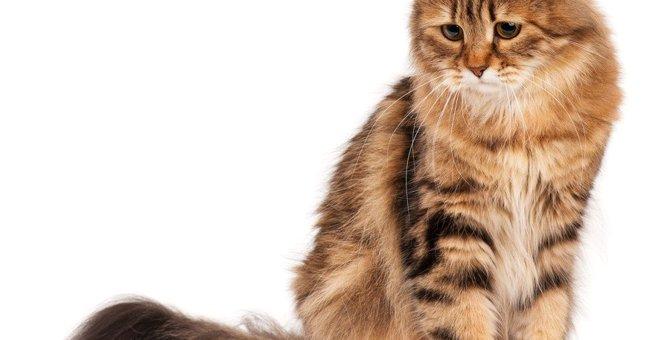 猫が心を開かなくなる飼い主のNG行為5つ!タブーを犯した時の対処法は?