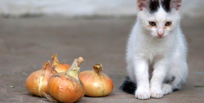 猫にとって『毒物』になる有害食材7選!主な中毒症状や対処法とは?