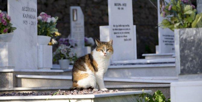 猫の葬儀をする時に知っておくべき事