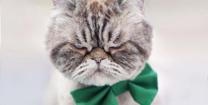 猫が怒ってる時にしてはいけない5つのNG行動