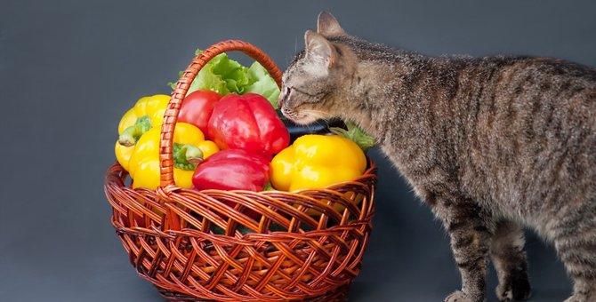 猫にピーマンは与えていいのか、気をつける成分とその副作用