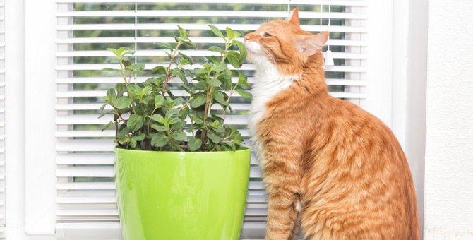 猫に安全な観葉植物のおすすめ5選!