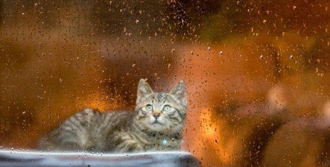 【気象病】猫にも天気の影響ってあるの?