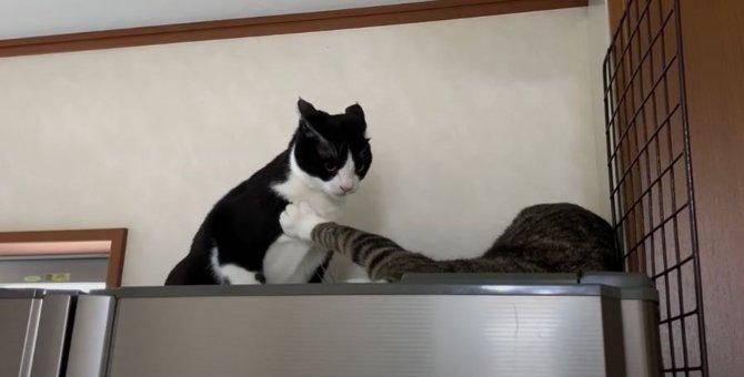 誰も逆らえぬ!母猫ちゃんの強烈な目力をご覧あれ!
