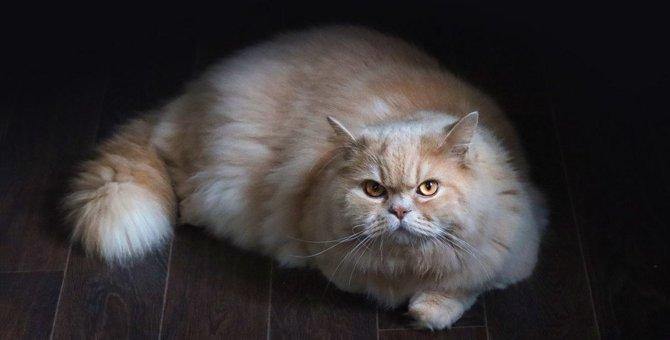 猫に絶対嫌われる『最悪な接し方』3つ