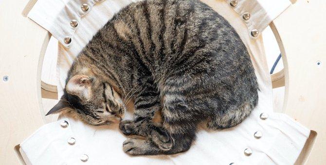 猫が『丸まって寝る』心理3選!ニャンモナイト状態で眠るには理由がある?