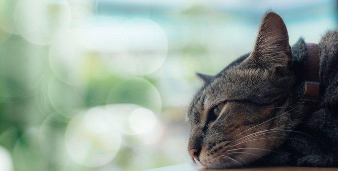 お留守番が苦手な猫…それ『分離不安症』かも!