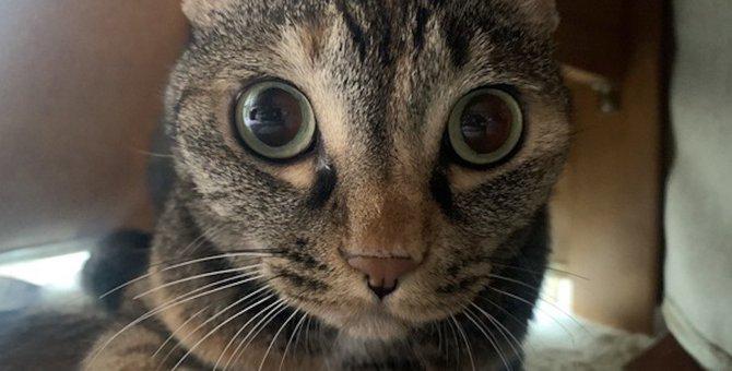 『警戒心が強い』猫の特徴4つ