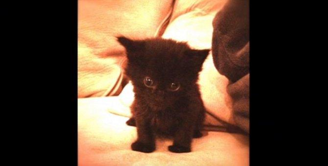 「黒猫は不吉だから」と施設に断られ続けた保護猫コールの物語