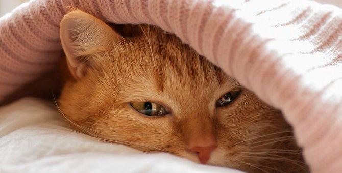 マカロンベッドは猫の寝床に最適!ねこが虜になる5つの商品をご紹介