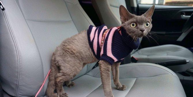 猫との『ドライブ』で起こりやすい不測の事態4つ!怪我や事故を防ぐために絶対すべき対策とは?