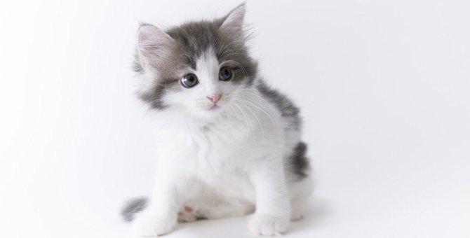 子猫を飼う時の室温、快適に過ごせるためにできる事