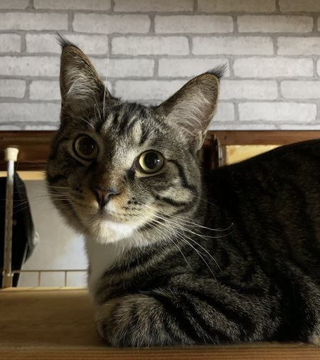 猫に嫌な思いをさせてしまうかもしれない5つの行為