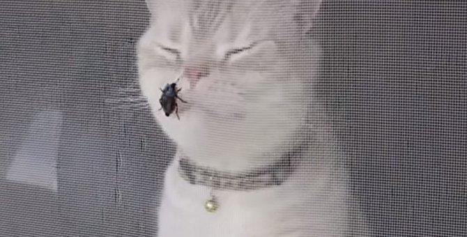 カメムシvs猫!強烈なニオイについ目をしぱしぱ
