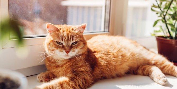 『熱中症にかかりやすい猫』の共通点5つと対策
