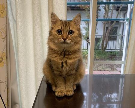 室内の猫に幸せに暮らしてもらうための方法5つ