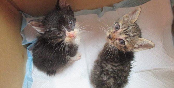 炎天下の中でアスファルトの上に放置されていた子猫2匹の運命は…