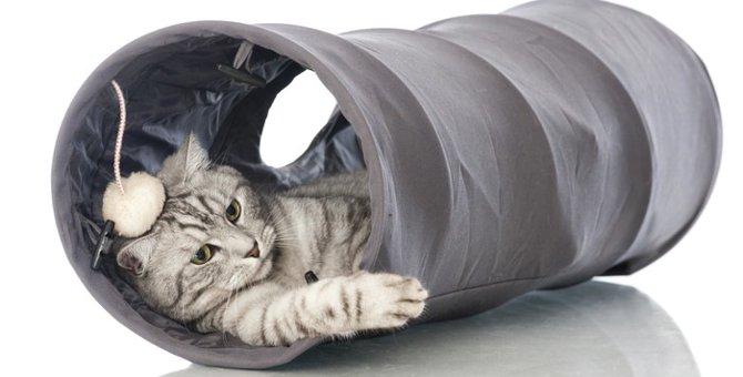 猫のトンネルグッズがあると良い理由