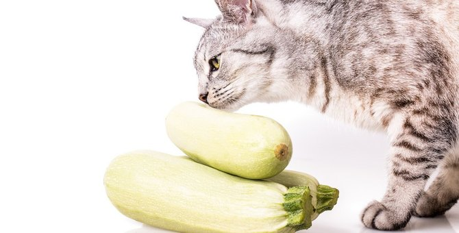 猫にズッキーニ食べさせてもいい?注意する事