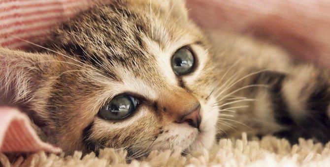 子猫に絶対やってはいけないNG行為4選