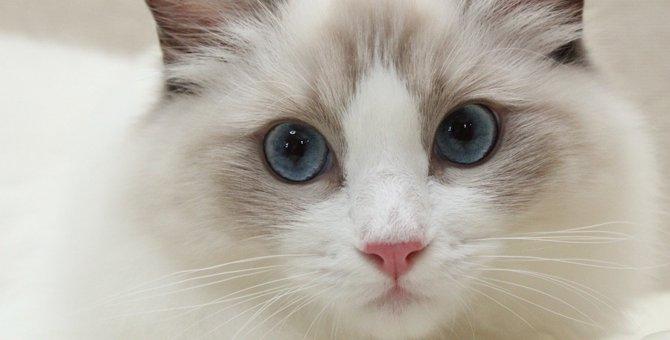 猫の健康状態は「目やに」でわかる!病気や怪我の時の目の状態とは?