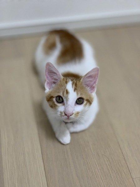 猫が自分からしゃべりかけてくるときに訴えていること4つ