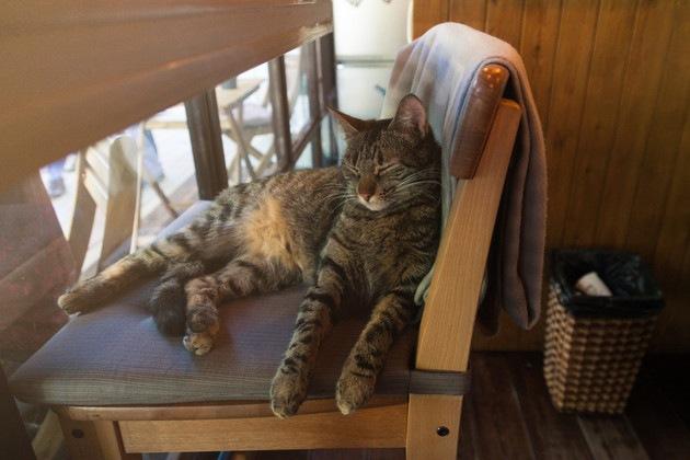 猫にとって最適な室温とは!暑い夏や冬の寒さを乗り切る方法