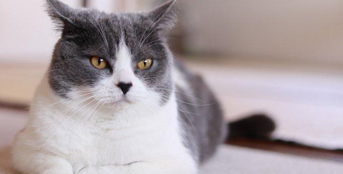 猫が『不愉快な相手』だけにする態度5選