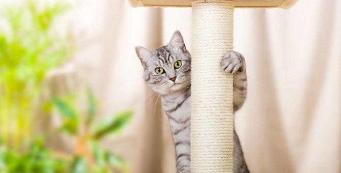 猫は狭いお部屋だとストレスがたまる?快適に過ごせる6つの方法