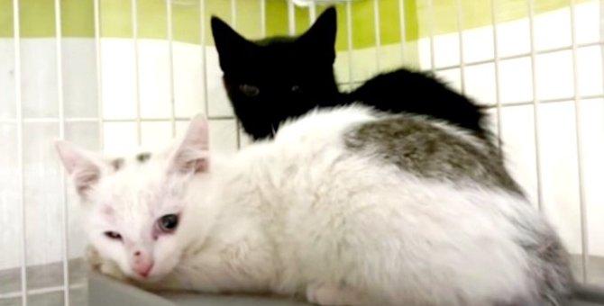 怪我で弱ったママ猫と3匹の子猫…保護を試みるも困難を極めて?