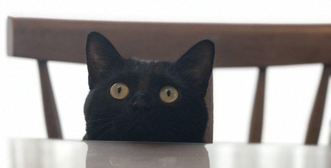 猫を振り向かせる『魔法のワード』5つ!絶対反応しちゃう不思議な言葉とは?