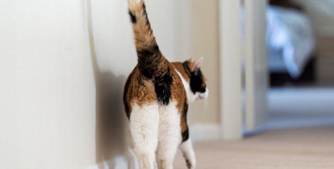 猫の『おなら』が臭い5つの原因と対処法