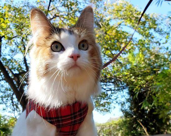 「猫友」をつくるメリットとつくり方