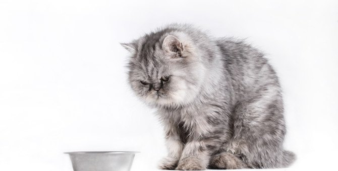 猫に『お手・お座り・待て』を覚えてもらう2つの方法