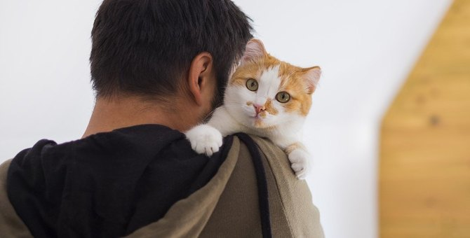 亡くなった愛猫に謝りたい…気持ちを伝えるには?